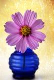 Różowy kosmosu kwiat w błękitnej wazie obraz royalty free