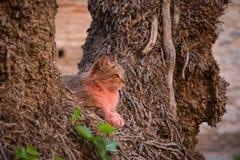 Różowy kot w Marrakesh Zdjęcie Royalty Free