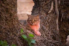 Różowy kot w Marrakesh Zdjęcia Royalty Free