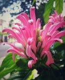 Różowy kwiat jak czułki lub dżdżownicy w miasto ulicie zdjęcie stock