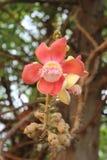 Różowy kwiat Różowy kwiat na natury tle obrazy stock