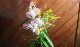 Różowy kwiat na stole zdjęcie royalty free
