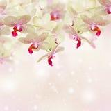 różowy kwiat orchidei zdjęcie royalty free