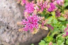 Różowy kwiat przeciw tłu ulistnienie w makro- i miękkiej ostrości zdjęcia royalty free