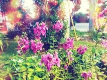 Różowy kwiat w ogródzie obrazy stock