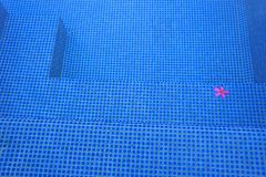 Różowy kwiat w pływackim basenie Fotografia Stock