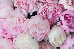 różowy kwieciste tło Zdjęcie Royalty Free