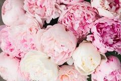 różowy kwieciste tło Zdjęcia Royalty Free