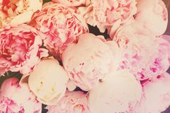różowy kwieciste tło Obrazy Royalty Free