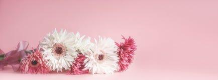 Różowy kwiecisty sztandaru lub szablonu tło z pięknymi kwiatami Fotografia Royalty Free
