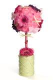 Różowy kwiecisty torpiary nad białym tłem Obraz Stock