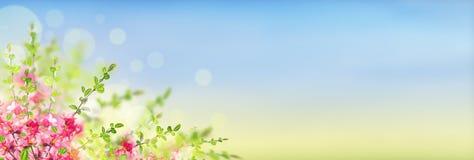 Różowy kwitnienie kwitnie krzaka na pogodnym krajobrazowym tle z bokeh, sztandar Fotografia Stock