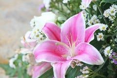 Różowy Lilly kwiat obrazy royalty free