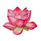 Różowy lotosowy kwiat odosobniony beak dekoracyjnego latającego ilustracyjnego wizerunek swój papierowa kawałka dymówki akwarela ilustracji