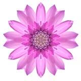 Różowy mandala kwiatu ornament Kalejdoskopu wzór Odizolowywający obraz stock
