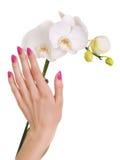 Różowy manicure i biały orchidea Fotografia Royalty Free
