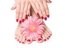 Różowy manicure i pedicure z kwiatem obraz stock