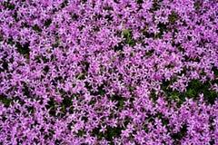 Różowy moss/nature/tło Obrazy Stock