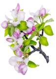 Różowy nowy życia pojęcie Obrazy Stock