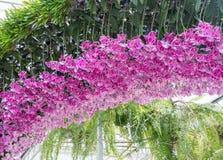 Różowy orchidea łuk Zdjęcie Royalty Free