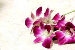 Różowy orchidei i światła tło 497 Obrazy Stock