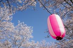 Różowy owalny lampion obrazy stock