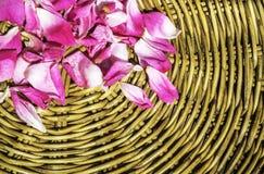 Różowy płatek wzrastał na drewniany wyplatający łozinowym Fotografia Royalty Free