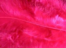 różowy piór tło Zdjęcia Royalty Free