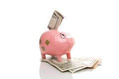 Różowy pieniądze pigg z dolarem Zdjęcia Stock