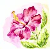 Różowy poślubnik, akwarela obraz. royalty ilustracja