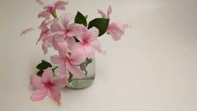 Różowy poślubnik Kwitnie w Szklanej wazie zbiory wideo
