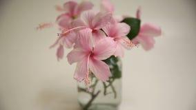 Różowy poślubnik Kwitnie w Szklanej wazie zdjęcie wideo