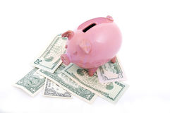 Różowy prosiątko bank na dolarach Zdjęcia Stock