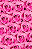 Różowy róża wzór obraz stock