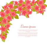 Różowy rocznik kwitnie wokoło białego tła dla ślubnego zaproszenia, małżeństwo karta, gratulacyjny sztandar, reklamuje Zdjęcia Royalty Free
