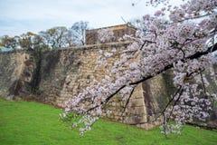 Różowy Sakura Czereśniowego okwitnięcia kwitnienie na gałąź drzewo z niebo widokiem Obraz Stock