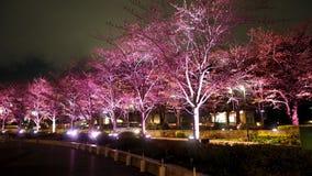 Różowy Sakura lub czereśniowy okwitnięcie przy nocą w Roppongi Tokio środku miasta Zdjęcia Stock