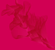 różowy tło Zdjęcie Stock