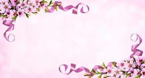 Różowy tło z wiosen gałązkami brzoskwinia kwiaty i jedwabniczy ribb Fotografia Royalty Free