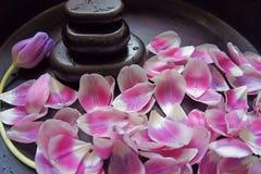 Różowy tulipanowy blackstone woodsink zdroju masaż relaksuje terapię Zdjęcia Royalty Free