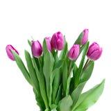 różowy zamknięci różowi tulipany Zdjęcie Royalty Free