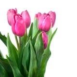 różowy zamknięci różowi tulipany Obraz Stock