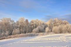 Różowy zmierzch w zima lesie - piękny zima krajobraz zdjęcie royalty free