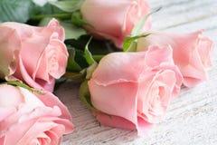 Różowych róż zamknięty up Obraz Royalty Free