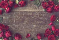 Róży tło fotografia royalty free