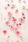 Róży tło Obrazy Stock