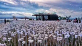 10000 róż Obrazy Royalty Free