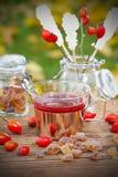 Różana modna herbata w ogródzie Obraz Stock