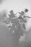 Różana sylwetka Obraz Stock
