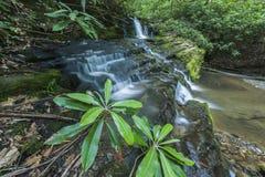 Różanecznik & siklawy, Greenbrier, Great Smoky Mountains NP Zdjęcia Stock